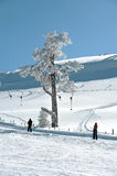 Skilift in de bolu (Turkije) bergen Royalty-vrije Stock Afbeelding