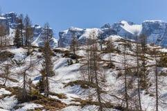 Skilift tussen pijnboombomen op de Dolomietbergen dichtbij Trento in Italië Stock Foto