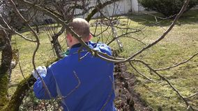 Skilled gardener trimming the branches of apple tree in early spring. Hand shot stock video footage