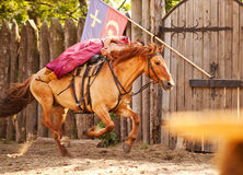 A skilled horse rider shows a risk trick Royalty Free Stock Photo