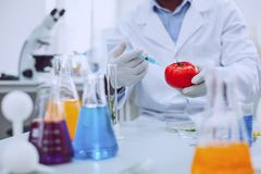 Skilled knowledgeable scientist testing tomatoes. Injection. Smart professional biologist wearing a uniform and testing tomatoes stock photo