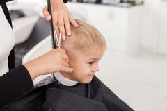 Skilled young female hairstylist is cutting human Stock Photo