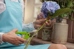 Skilled young saleswoman is caring of the flowers Royalty Free Stock Images