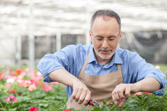 Skillful senior florist is working at garden Stock Photo