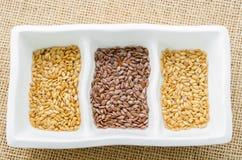 Skillnad av guld- linseeds och bruna linseeds (linfrö) Royaltyfri Fotografi