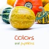 Skillnadbegrepp färgrika pumpor Royaltyfria Bilder