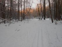 Skimarks im Wald Lizenzfreie Stockfotos