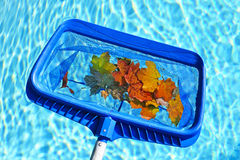 Skimming Leaves From Pool Royalty Free Stock Photo
