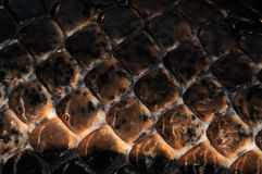 Skin-19. Snake skin, textures and backgrounds Royalty Free Stock Photography