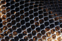Skin-23. Snake skin, textures and background Royalty Free Stock Image