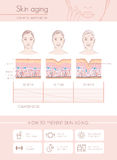 Skin aging. Diagrams and stages, anti aging prevention tips and female faces stock illustration
