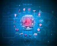 Skin anatomy background Stock Photography