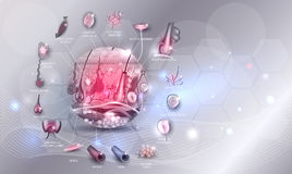 Skin anatomy in the round shape Royalty Free Stock Photos