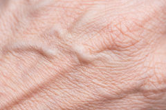 Skin background with wrinkles and veins. Caucasian skin background with wrinkles and veins Royalty Free Stock Photos