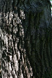 Skin bark tree Royalty Free Stock Photos