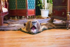 The skin of a bear on the floor in the interior of a room of the 19th century. stock images