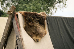 Skin of a bear Stock Photography