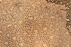 Skin of Bengal Monitor Lizard Royalty Free Stock Photography