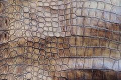 The skin of the big crocodile. Royalty Free Stock Photography