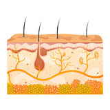 Skin cells Royalty Free Stock Image