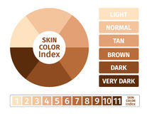 Skin color index , infographic  . 3 chart of skin Royalty Free Stock Photography