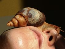 Skin cosmetology: cosmetic snail achatina on face royalty free stock photography