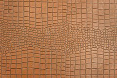 Skin of Crocodile texture pattern for background Stock Photos