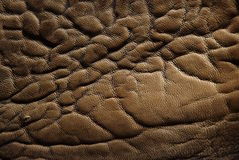 A skin is crocodilian Stock Photo