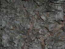 Skin det hårda träskället arkivbilder
