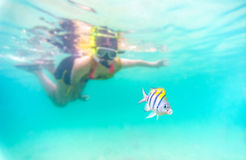 Skin diving or snokerling. Selective focus to the fish : Skin diving or snokerling at shallow of beach distrub the sea life Royalty Free Stock Photography