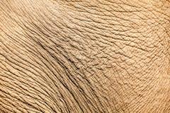 Skin elephant Stock Image