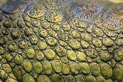 Skin of the gavial Royalty Free Stock Photos