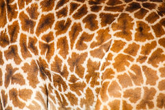 Skin gieaffe Royalty Free Stock Images