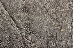 Skin of hippopotamus. Very thick skin of hippopotamus Royalty Free Stock Images