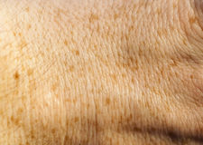 Skin of the human hand Royalty Free Stock Photo