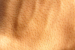 Skin human texture Royalty Free Stock Images