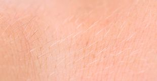 Skin human texture. Hair. Close up. Royalty Free Stock Photo