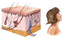 Skin. Illustration of drawing of hair anatomy Royalty Free Stock Photography