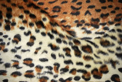 Skin of the leopard Royalty Free Stock Photo