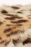 Skin of the leopard Royalty Free Stock Images
