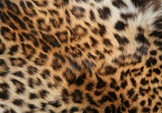 Skin of the leopard Stock Photography