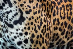 Skin and Leopard pattern. Skin and Leopard pattern for the background stock image