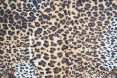 Leopard pattern texture. Skin leopard pattern texture background royalty free stock photo