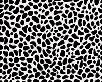 Skin of leopard Stock Images