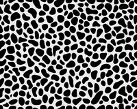 Skin of leopard 2 Stock Images