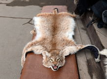 Skin lynx at the Vernisazh market in Izmailovo. Royalty Free Stock Photography