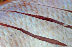 Skin Red nile tilapia fish. (Oreochromis niloticus) background Stock Photo
