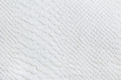 Skin of reptiles. The material tissue made under natural skin of reptiles are white Royalty Free Stock Photography