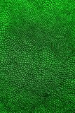 Skin reptiles such as crocodile or snake. Background of green cloth textured reptiles Stock Photo