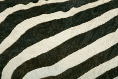 Skin's texture of Mountain zebra Royalty Free Stock Photos